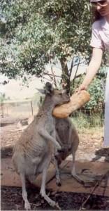 australia002_perth